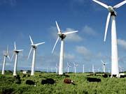 Відновлювані джерела енергії вперше випередили атомну енергетику в США
