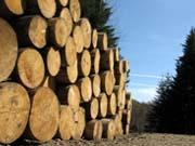 """""""Срубить"""" не удалось: СБУ изъяла партию контрабандной древесины на 40 млн грн"""