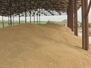 Підготовка до продажу. У Державній зерновій корпорації попередньо оцінили активи