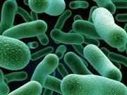 В Африці знайшли найдавнішу у світі бактерію