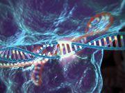 Вчені успішно застосували технологію для повного очищення інфікованих імунних клітин людини від генів ВІЛ
