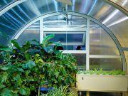 Украинская компания делает «умные» теплицы, где уход за растениями полностью программируется
