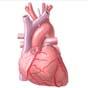 Google буде боротися із захворюваннями серця