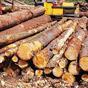 Будь-який євровиробник може виграти суд про незаконне обмеження експорту лісу з боку України - експерт
