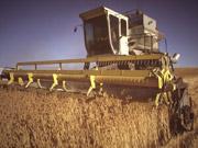 IFC профинансирует отечественных аграриев в текущем году на $200-300 млн