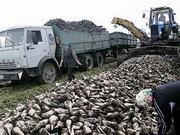 Производство сахара в Украине увеличилось на 40%
