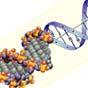 """У Росії перед Олімпіадою збирають ДНК у """"потенційних смертниць"""" - Reuters"""