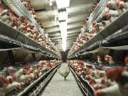 """Владелец """"Наша Ряба"""" и агрохолдинга """"Мироновский хлебопродукт"""" жалуется, что ЗСТ с Европой - это обман Украины"""