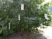 Надруковані на листках сенсори підкажуть фермерам, коли пора поливати