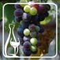 Вчені виявили найдавніше вино на світі