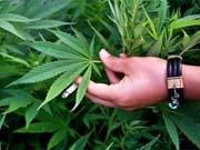 В 2015 году в США продали марихуаны на 5,4 миллиарда долларов