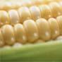 Світові ціни на кукурудзу побили черговий рекорд