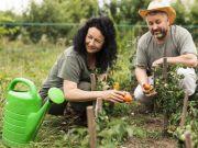 Експерт розповіла, скільки можна заробити на сезонній роботі в Україні