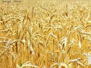 Продавать сельхозземли позволят в 2013