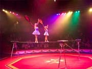 Уряд пояснив, чому державі не потрібні цирки