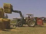 Рост экспорта агропродукции составил 22,5% по сравнению с прошлым годом