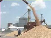 Мінагропрод вводить обмеження на експорт пшениці