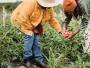 Небольшие семейные фермы смогут получить субсидию в сумме 5 тысяч гривен на гектар