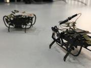 Rolls-Royce разработает роботараканов для быстрой диагностики авиадвигателя