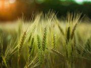 Коли на дворі пандемія, а грошей нема: історія агробізнесу, якому допомогли кредити 5-7-9%