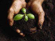 Експерт розповів, для кого Яценюк готує землю