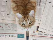 Британський кіт обігнав аналітиків за точністю фінансових прогнозів