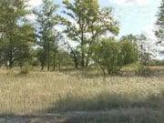 Рада приняла закон о национальной инвентаризации лесов