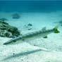 У Росії створили рибоподібного робота «Тунець» для підводних досліджень