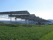 Агрофотоэлектрические станции позволят совместить солнечную энергетику и сельское хозяйство