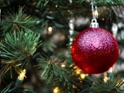 Для проверки легальности новогодней елки создано мобильное приложение
