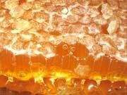 Главными потребителями украинского меда стали Германия, Польша и Бельгия