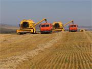 Украина соберет 18 млн тонн кукурузы