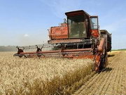 Зерно бере обсягом