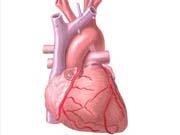 Для серця створили роботизований протез (фото)