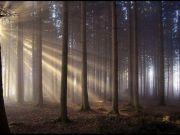 IKEA стала найбільшим приватним власником лісів у Литві