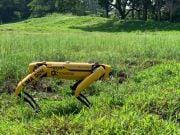 В Сингапуре парки патрулируют роботы-собаки - следят за дистанцией (видео)