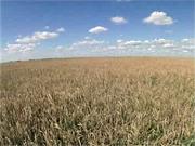 Украинский агросектор привлекает инвестиции