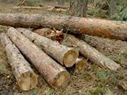 Новые санитарные правила вырубки в украинских лесах экологи называют большой победой