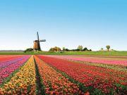 Как украинцу уехать на работу в Нидерланды