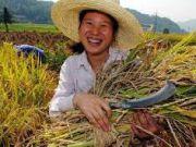 Китай подав в суд на Україну: вимагає повернути збитки на $3 млрд за невиконання поставки зерна