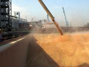 Обсяг експорту зернових наблизився до 5 млн тонн