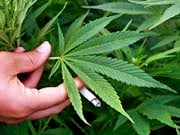 Крупнейшая табачная компания США инвестирует $1,8 млрд в производителя конопли Cronos