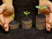Названа средняя стоимость 1 га сельхозземель после запуска рынка