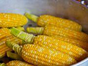 Україна витісняє США з китайського ринку кукурудзи