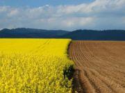 Продовження мораторію на продаж землі негативно вплине на регіони - І.Міклош