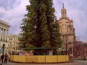 """Главная елка страны в последний раз будет """"натуральной"""""""