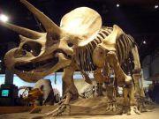 В Париже на аукционе продали два скелета динозавров за 2,2 млн долл