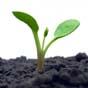 Кого треба допускати на ринок землі: думка експерта
