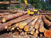 Убытки государства от незаконных вырубок составляют свыше 1 млрд грн