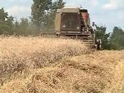 Урожай зернових перевищив історичний максимум